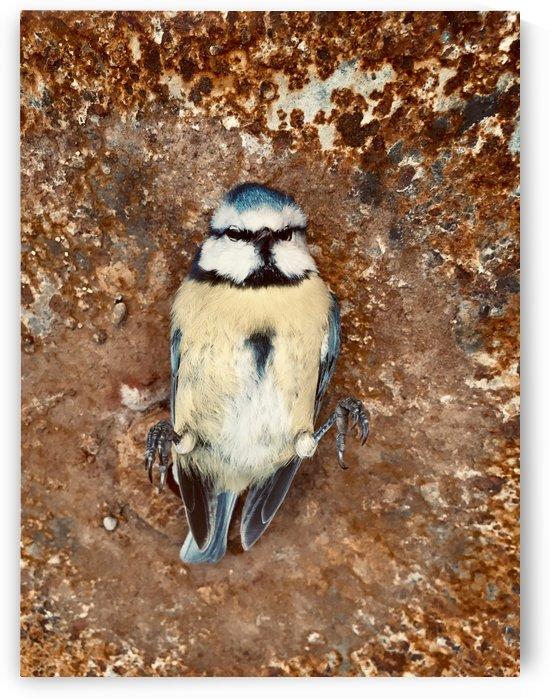 R.I.P. Little Lovely Bird by Swiss Art by Patrick Kobler
