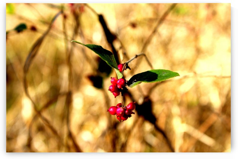 Fall Berries by Natures Alchemy Captured
