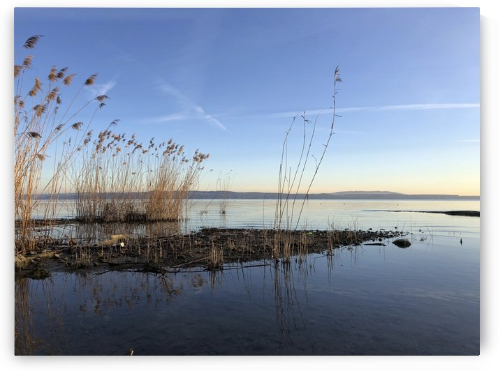 Morning Silence with Reed at Lake of Constance by Swiss Art by Patrick Kobler