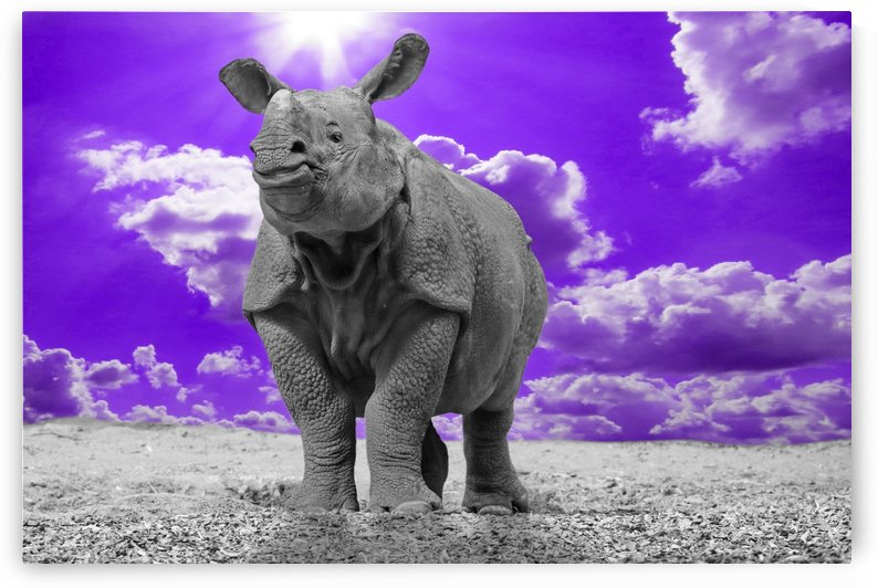 Rhino Sky purple ck by Thula-Photography