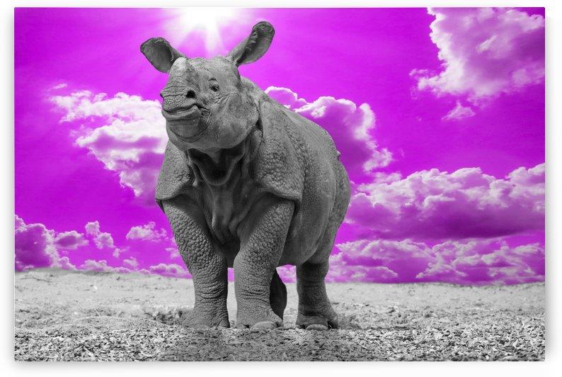 Rhino Sky magenta ck by Thula-Photography
