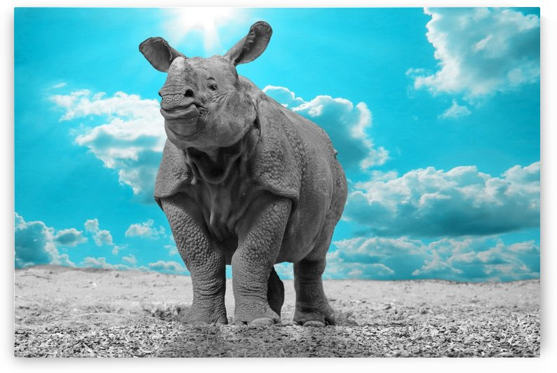 Rhino Sky turquoise ck  by Thula-Photography