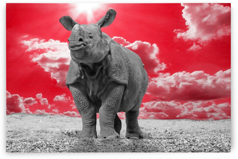 Rhino Sky red ck  by Thula-Photography