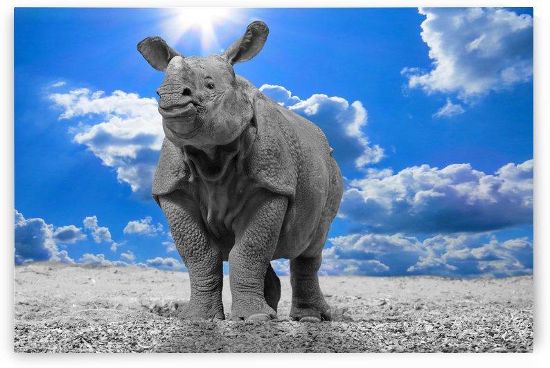 Rhino Sky blue ck  by Thula-Photography