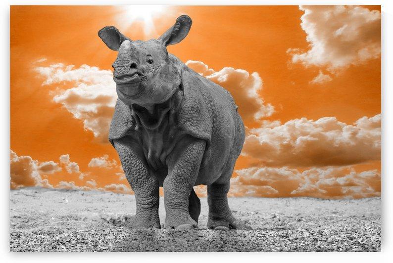 Rhino Sky orange ck by Thula-Photography