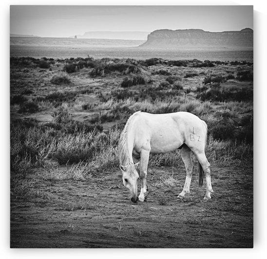 Landscape with Horse  by Jarmila Kostliva Studio