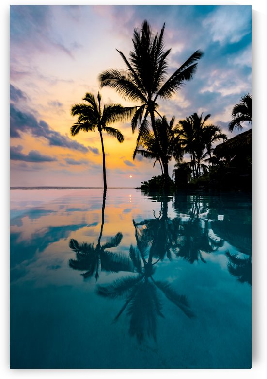 Palm Tree Reflection by Lucas Moore