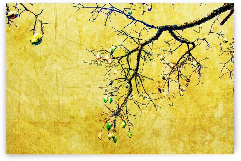 Nature - Tree I by Carlos Wood