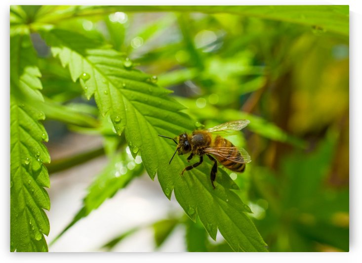 groovy honey bee by Sara Whelen