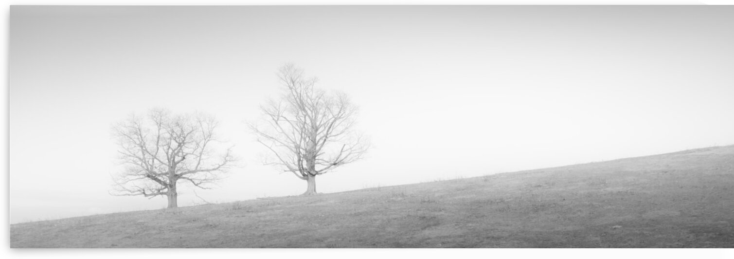 Gibbet Hill 2 by Dave Therrien