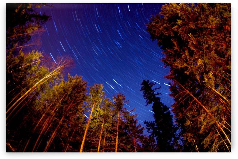 forest star trails  by Sara Whelen
