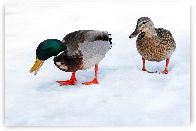 Winter Walk by Deb Oppermann