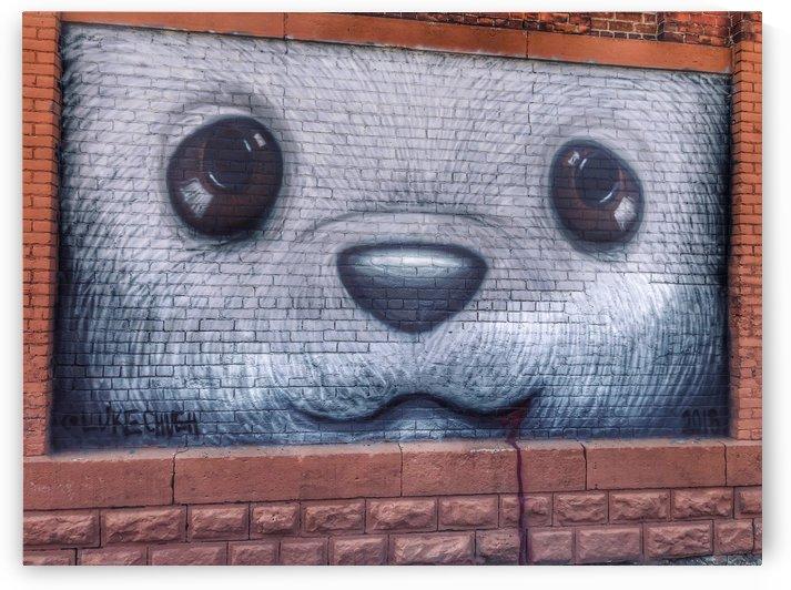 Bear View by UrbanStreetBeats