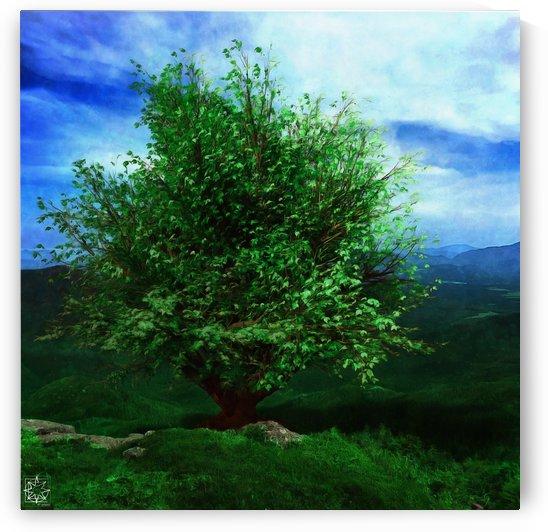 The Katahdin Tree by ChrisHarrisArt