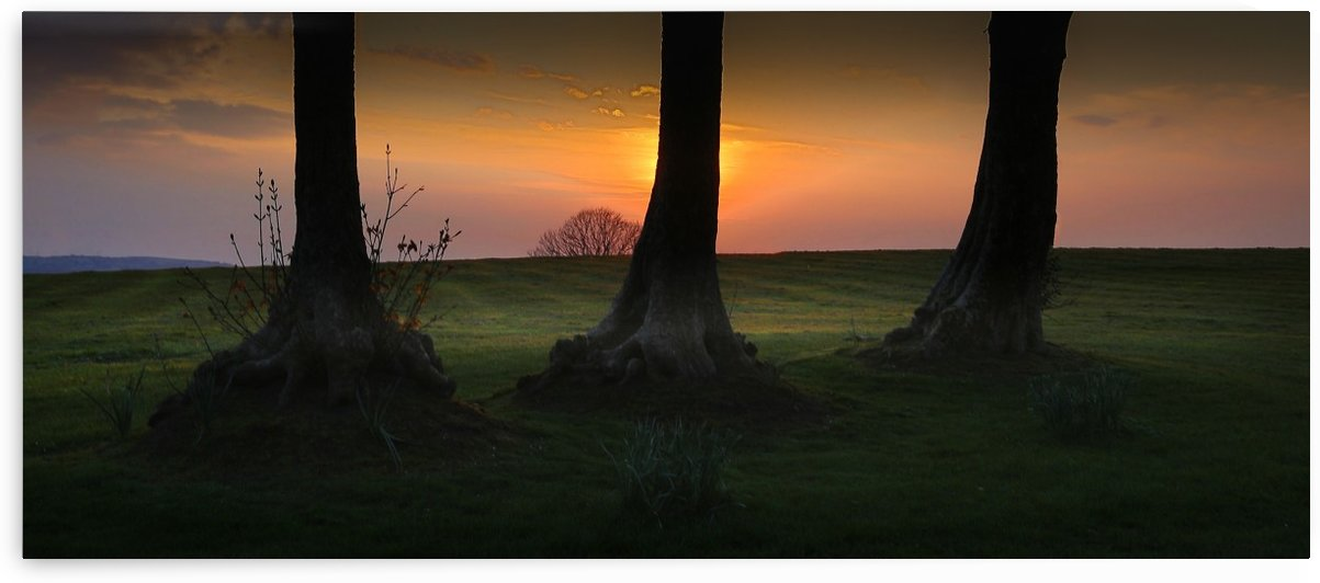 Tree trunks at Ravenhill park by Leighton Collins