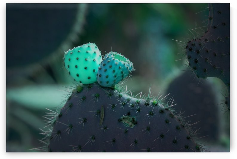 Turquoise Cactusberry by MallorcaImages