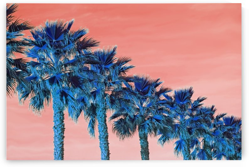 Palm Tree Diagonal by MallorcaImages
