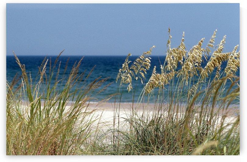 Virginia Beach Photograph by Katherine Lindsey Photography