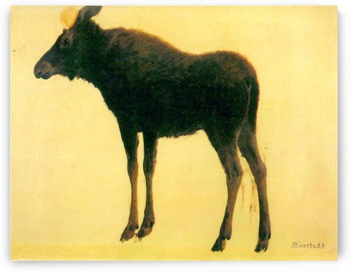 Elk by Bierstadt by Bierstadt