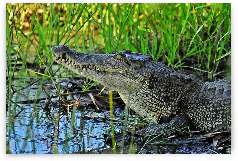 Never Smile At A Crocodile by Natasha McGhie