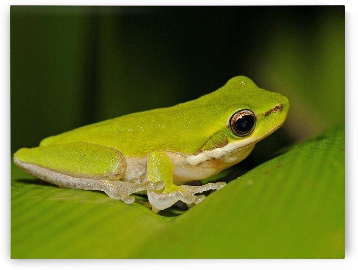 Green Frog by Natasha McGhie