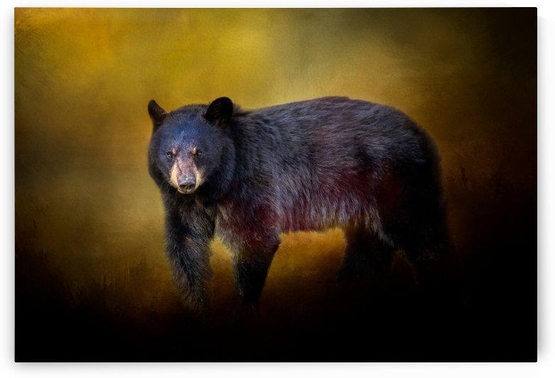 Bear by Michel Soucy