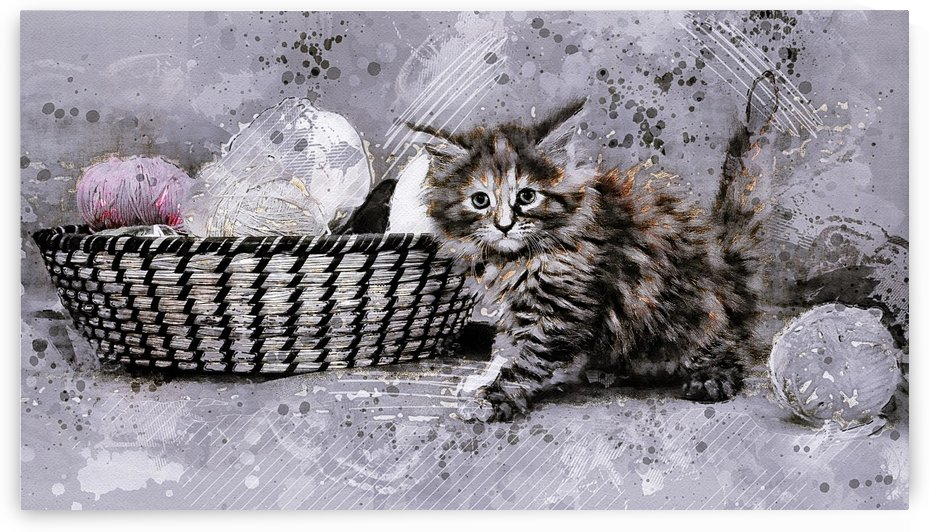 cat young cat kitten grunge by Shamudy