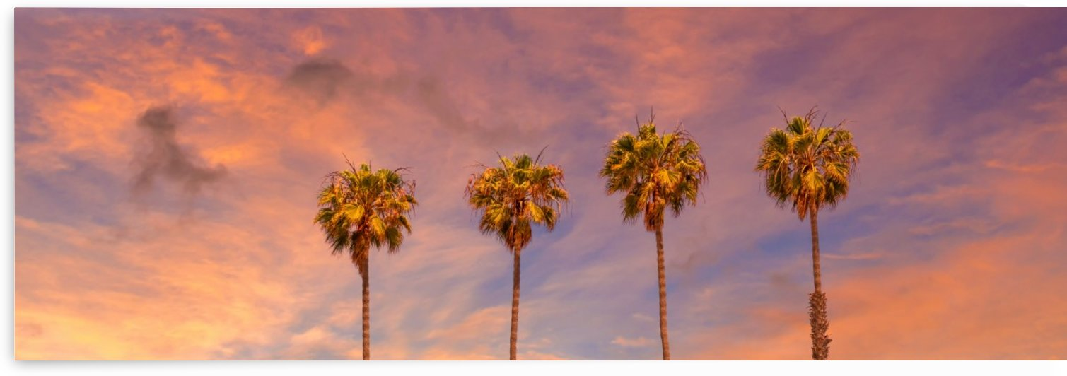 Palm trees sunset | panoramic view by Melanie Viola
