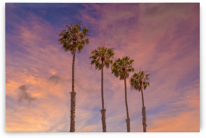 Palm trees sunset  by Melanie Viola