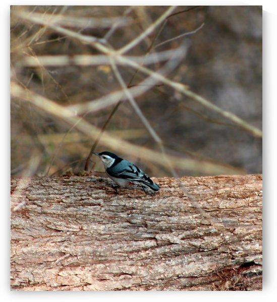Woodworking bird by Natures Alchemy Captured