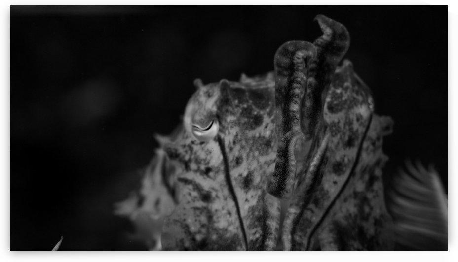 Cuttlefish B&W by Michael Brown