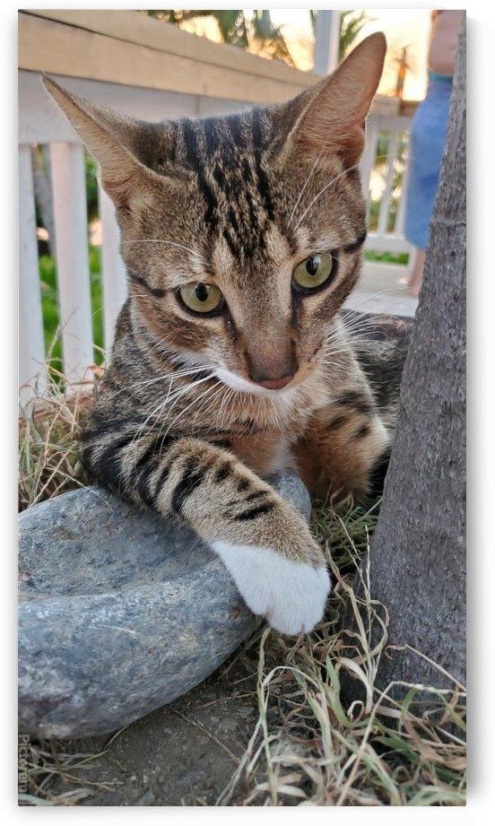 Roatan Cat by Michael Brown