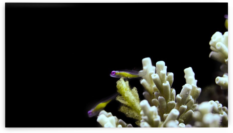 Small Fish by Michael Brown