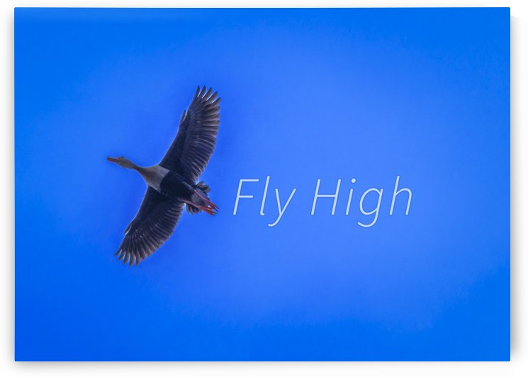 Fly High Concept Background Photography by Daniel Ferreia Leites Ciccarino