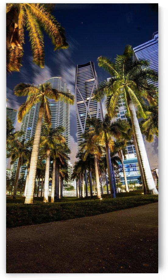 Miami Palmscape by Depth Of Fin
