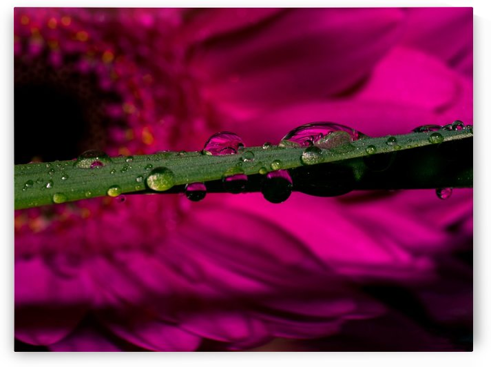 A Drop Of Sunshine by Verinder Grewal Photography