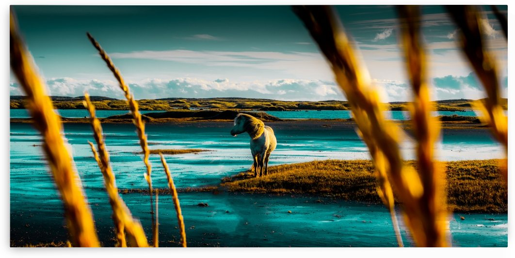 Wild Horses by Verinder Grewal Photography