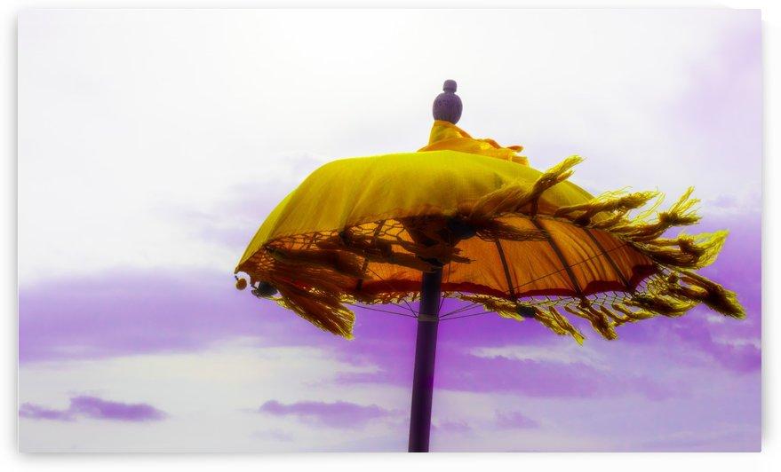 Gimme Shelter by Verinder Grewal Photography