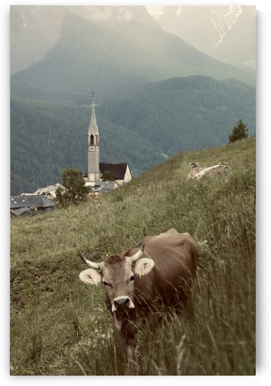 Swiss Brown Cow with Horns with Church of Sent in the Background I by Swiss Art by Patrick Kobler