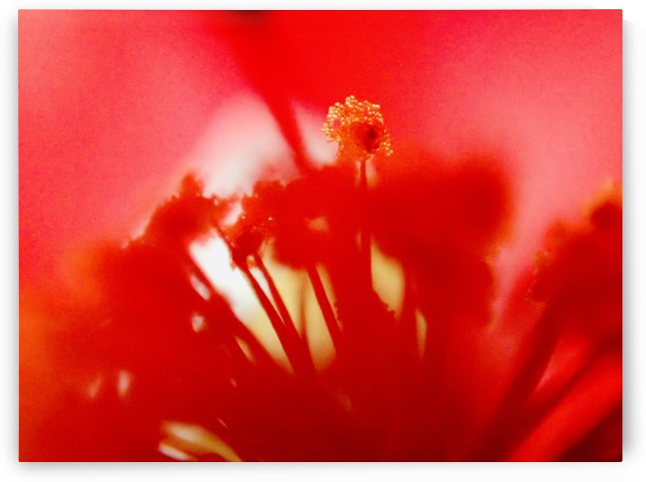 Abstract Flower 4 by Victor F Rodriguez Jr