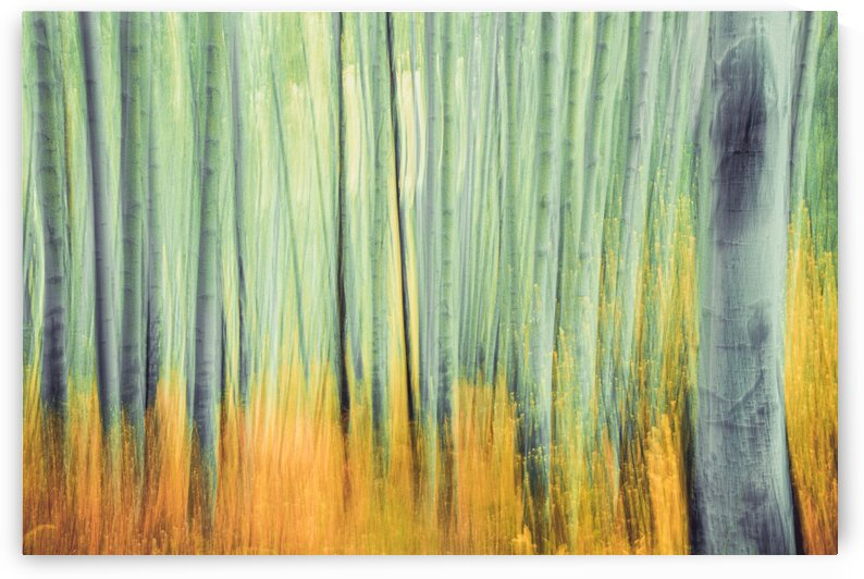 Aspen Trees in movement by Sebastian Dietl