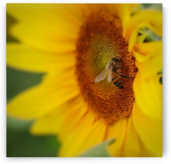 Honey Bee by Jeff Vandewyngaerde
