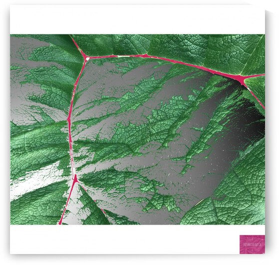 Leaf and Pink Veins by BotanicalArt ca