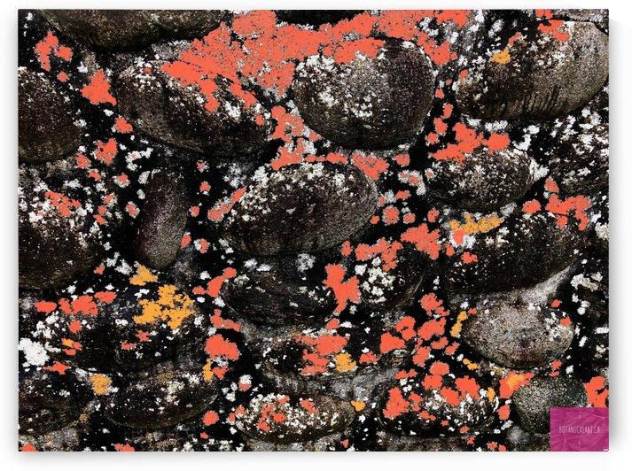 Stones and Lichen by BotanicalArt ca