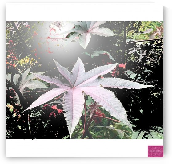 Floral Burst by BotanicalArt ca