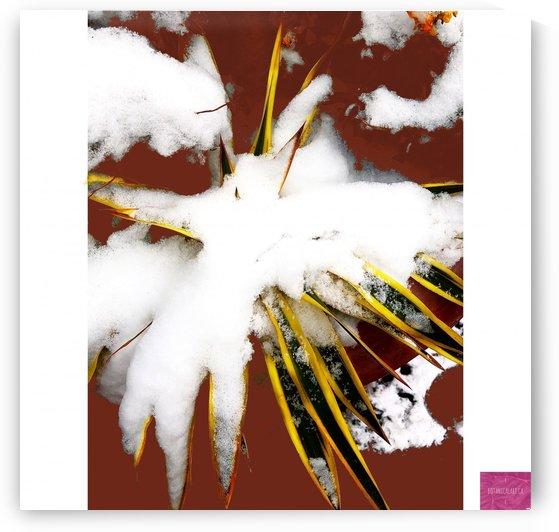Snow on Palm by BotanicalArt ca