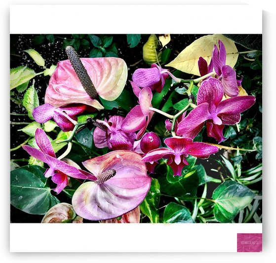 Tropical Pink  by BotanicalArt ca