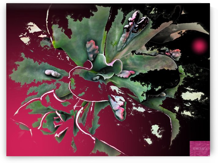 Cactomania by BotanicalArt ca