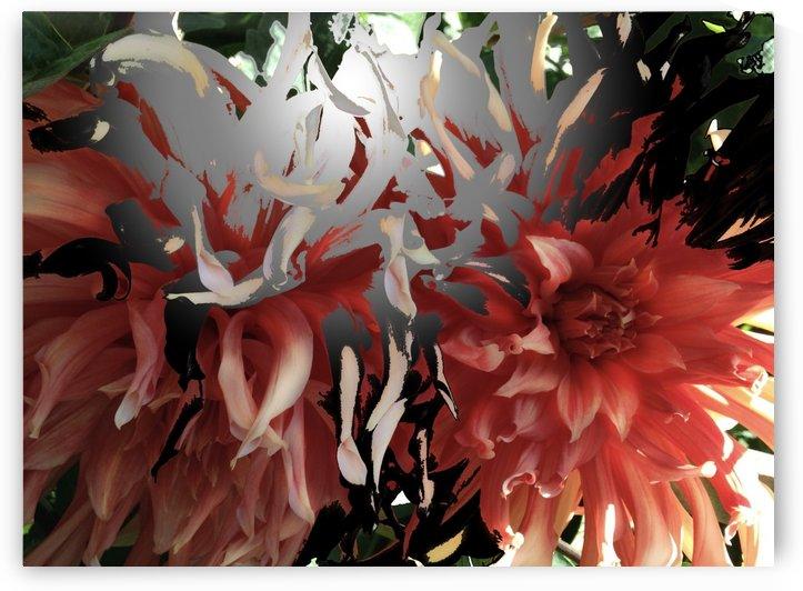 Abstract Chrysanthemum 2 by BotanicalArt ca
