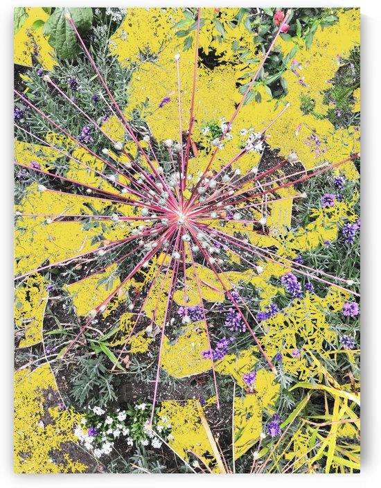 Abstract Alium by BotanicalArt ca